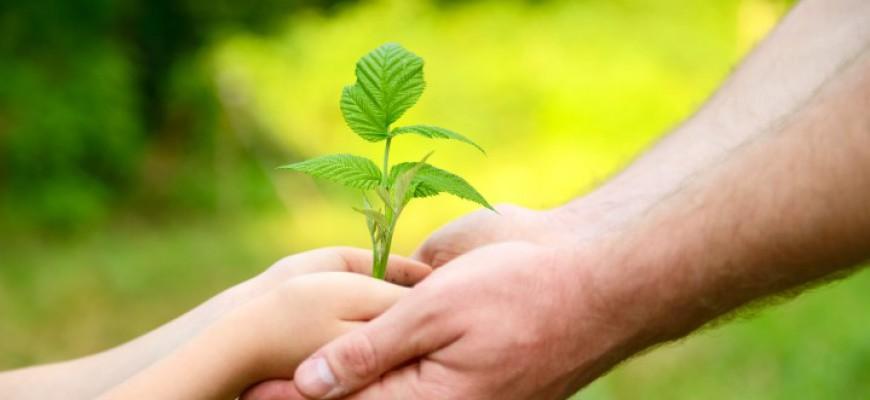 טיפים לחינוך ילדים – איך להשתמש בהם באופן מיטבי?